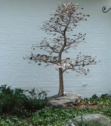 Кованое дерево для сада